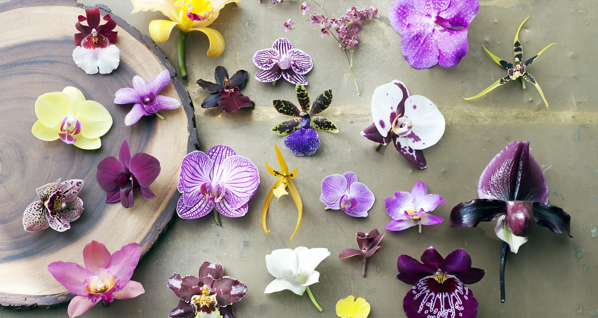 Orchidee In Magische Uitstraling!