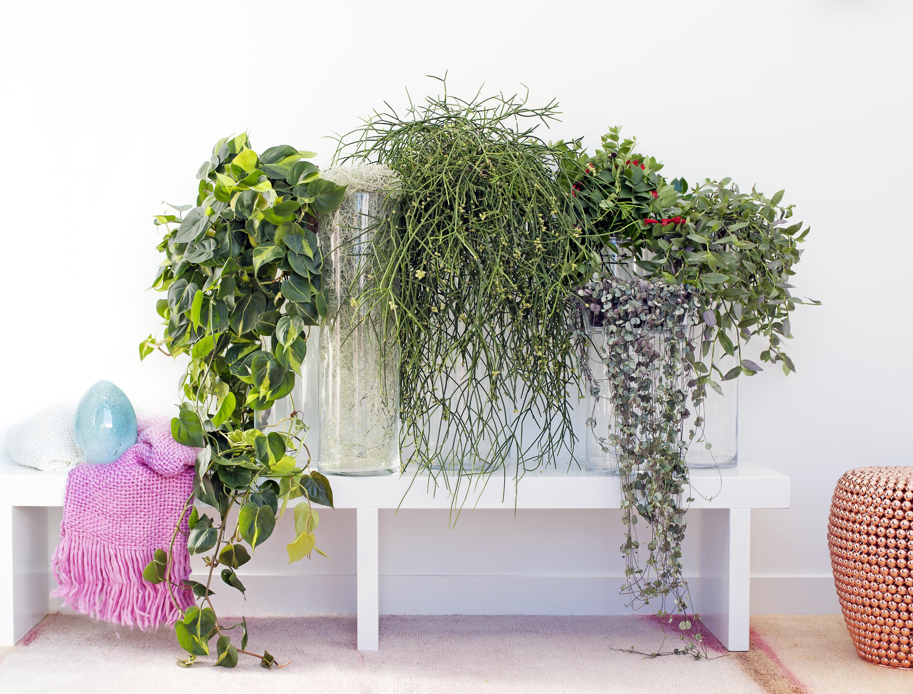 Hangplanten Zijn De Woonplanten Van De Maand September